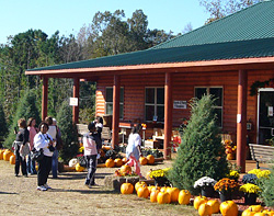 Be sure to visit our Halloween and Christmas store at Motley's Pumpkin Patch and Christmas Trees, Little Rock, Arkansas-Central Arkansas' Favorite Family Outing