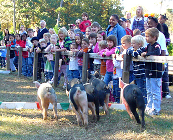 The kids squeal as much as the racing piggies at Live Pig Races and Family Fun at Motley's Pumpkin Patch and Christmas Trees, Little Rock, Arkansas